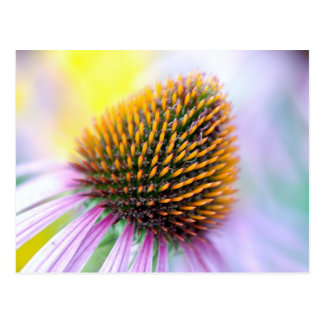 Colorful Cone Flower Postcard