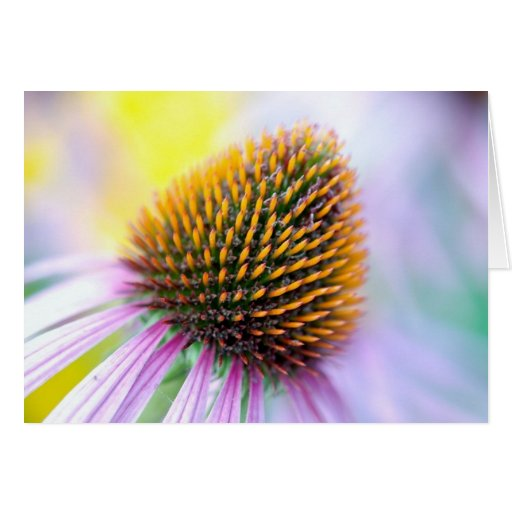 Colorful ConeFlower NoteCard Stationery Note Card