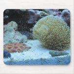 Colorful Coral in saltwater aquarium mousepad