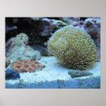 Colorful Coral in saltwater aquarium print poster