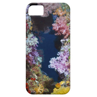 Colorful coral reef iPhone 5 cases