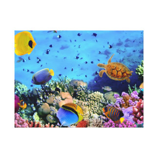 Colorful Coral Reef Critters Canvas Print