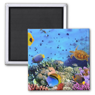 Colorful Coral Reef Critters Magnet