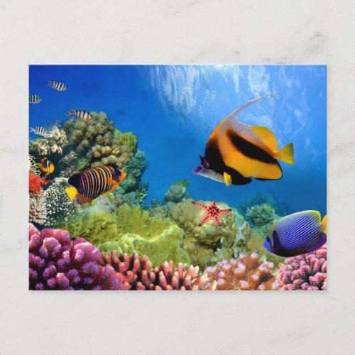 Colorful Coral  Tropical Fish Postcard