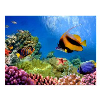 Colorful Coral & Tropical Fish Postcard