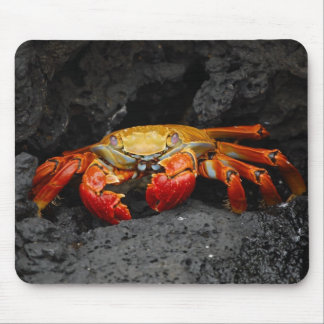 Colorful Crab Mouse Pad