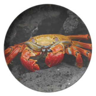 Colorful Crab Party Plates