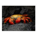 Colorful Crab Postcard