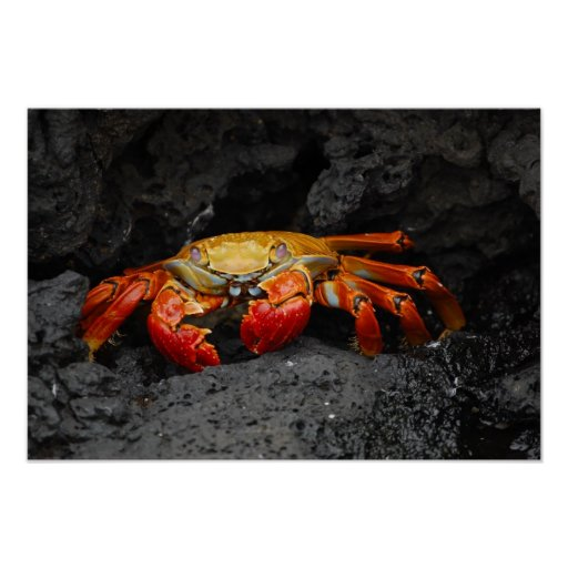 Colorful Crab Posters