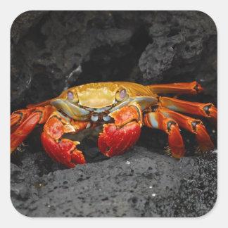 Colorful Crab Sticker