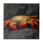 Colorful Crab Tile