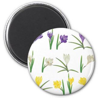 Colorful Crocus Flowers Magnet