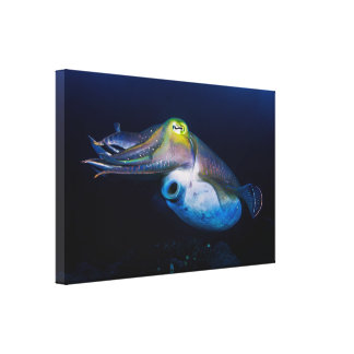 Colorful Cuttlefish Wrapped Canvas