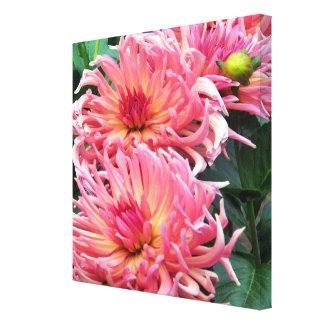 Colorful Dahlia Flowers Canvas Print