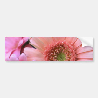 Colorful Daisies Bumper Sticker