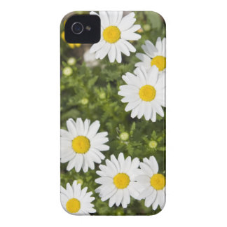 Colorful Daisies iPhone 4 Case-Mate Case