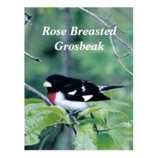Colorful Dude, Rose Breasted Grosbeak Post Card