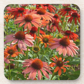 Colorful echinacea floral print drink coasters