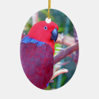 Colorful eclectus parrot ceramic ornament