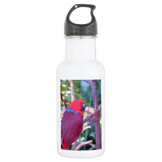 Colorful eclectus parrot 18oz water bottle