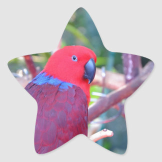 Colorful eclectus parrot star sticker