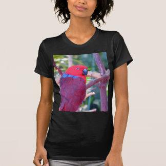Colorful eclectus parrot t shirt