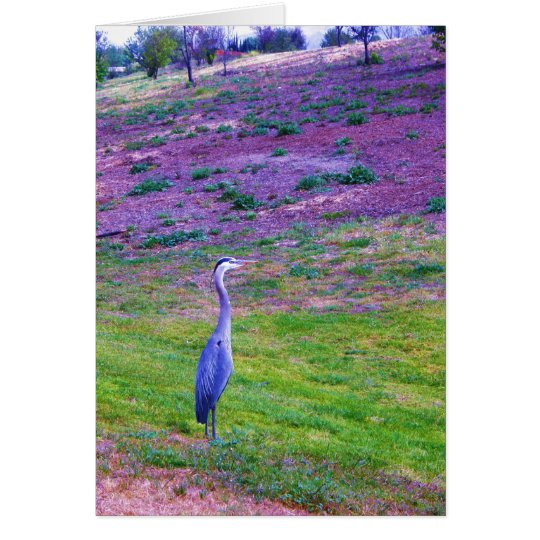 Colorful Egret Card