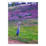 Colorful Egret Cards