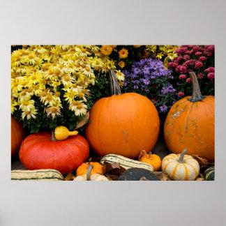 Colorful fall decorative pumpkin display poster