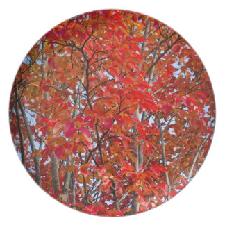 Colorful Fall Foliage Dinner Plate