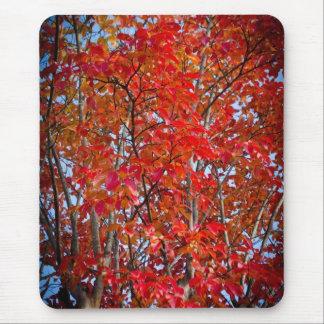 Colorful Fall Foliage Mouse Pad