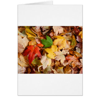 Colorful Fall Leaves Card