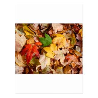 Colorful Fall Leaves Postcard