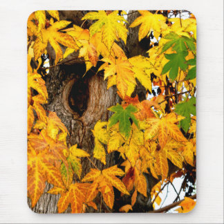 Colorful Fall Leaves & Tree Trunk Mouse Pad