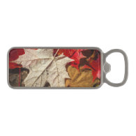 Colorful Fall Maple Leaves Floating Magnetic Bottle Opener