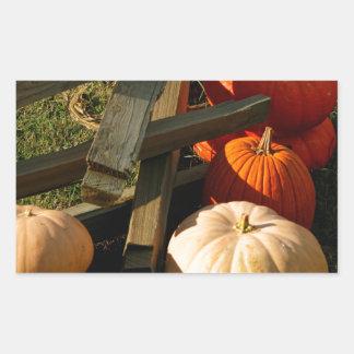 Colorful Fall Pumpkins Rectangular Sticker