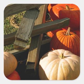 Colorful Fall Pumpkins Square Sticker