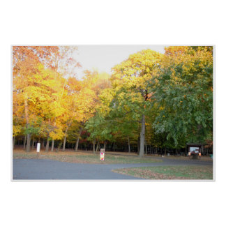 Colorful Fall Trees Photo Poster