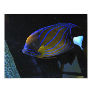 Colorful Fish Card