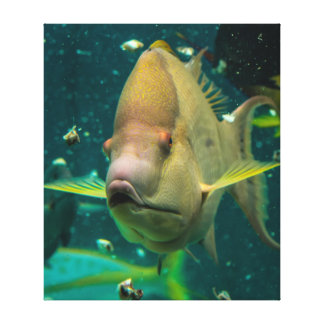 Colorful Fish Photo Stretched Canvas Prints