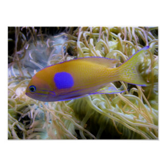 Colorful Fish Photo Poster