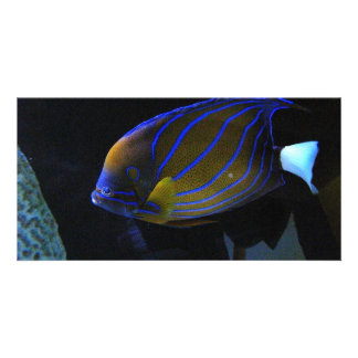Colorful Fish Photo Card