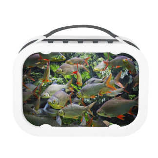 Colorful fishes in Aquiram Lunch Box