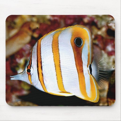 Colorful fishy mouse pad