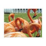 Colorful flamingos canvas print