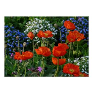Colorful Flower Bed  with red poppies Poster