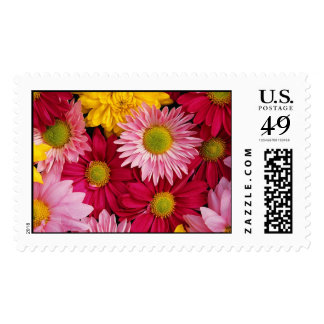 Colorful Flower Collage Postage