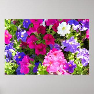 colorful flower garden poster