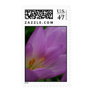 Colorful flower postage stamps bulk discount