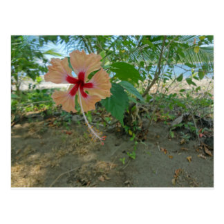 colorful flower postcard